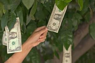 money-grows-on-trees