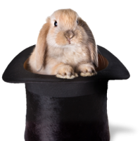 workplace design like a rabbit in a hat