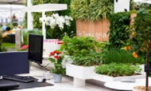 Personalised design and office plants proven to boost wellness and performance