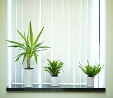 Office planting improves workers' quality of life and productivity finds study