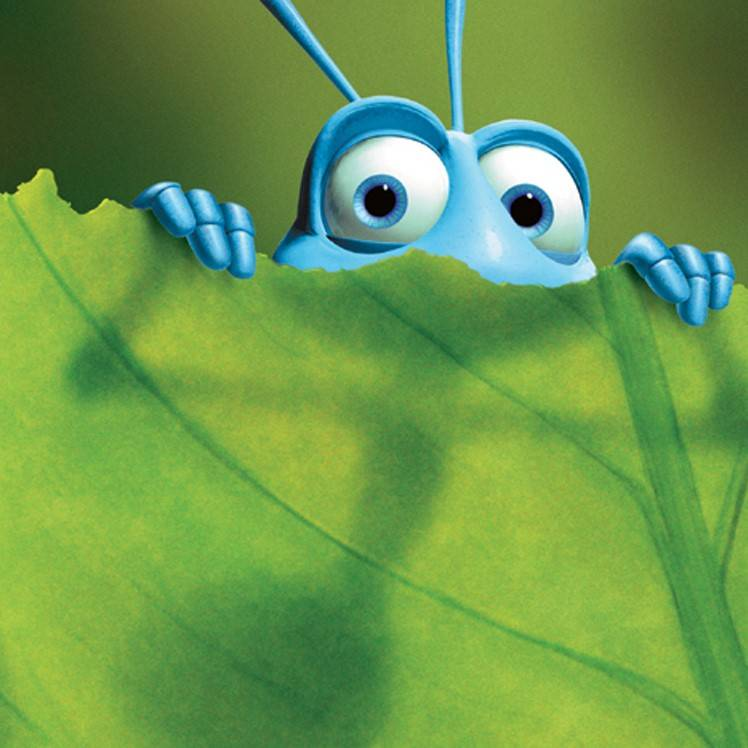 What A Bug's Life can teach us about building and workplace design