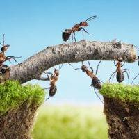 Employee resistance in sharing ideas with teams undermines success